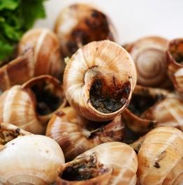 Snails-detail